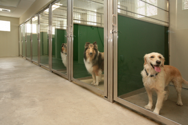 Pet Boarding Facilities Offer Everything Your Pets Need